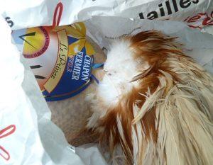 Kapaun aus der Bresse