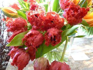 Extravagante Tulpen