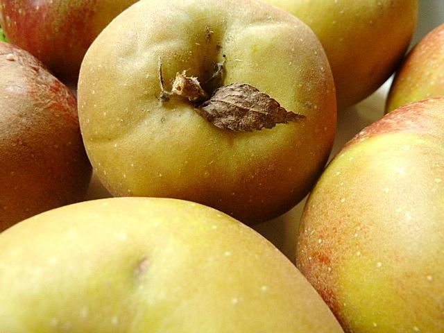 Boskopäpfel