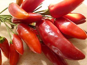 Frische Chilis